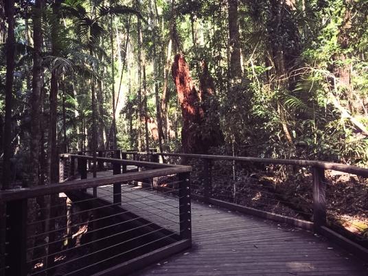 Rain-Forest-Fraser (1 of 2)